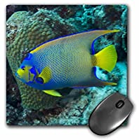 Queen Angelfish, Bonaire, Netherlands Antilles-CA09 POX0007- Mouse Pad, 8 by 8 inches (mp_71889_1) [並行輸入品]