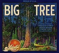 Bigツリーブランド–レモンCove、カリフォルニア–Citrusクレートラベル 36 x 54 Giclee Print LANT-57151-36x54