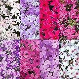 芝桜(シバザクラ):花色ミックス3号ポット 8株セット ノーブランド品