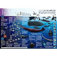 海から始まる動物の進化 A2判