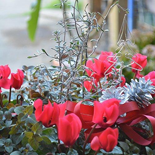 ガーデンシクラメン 寄せ植え