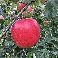 葉とらず 味極み りんご 減農薬 長野県産 (訳あり サンふじ 5キロ)