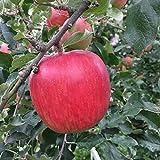 葉とらず 味極み りんご 減農薬 長野県産 (サンふじ 特選 5キロ)