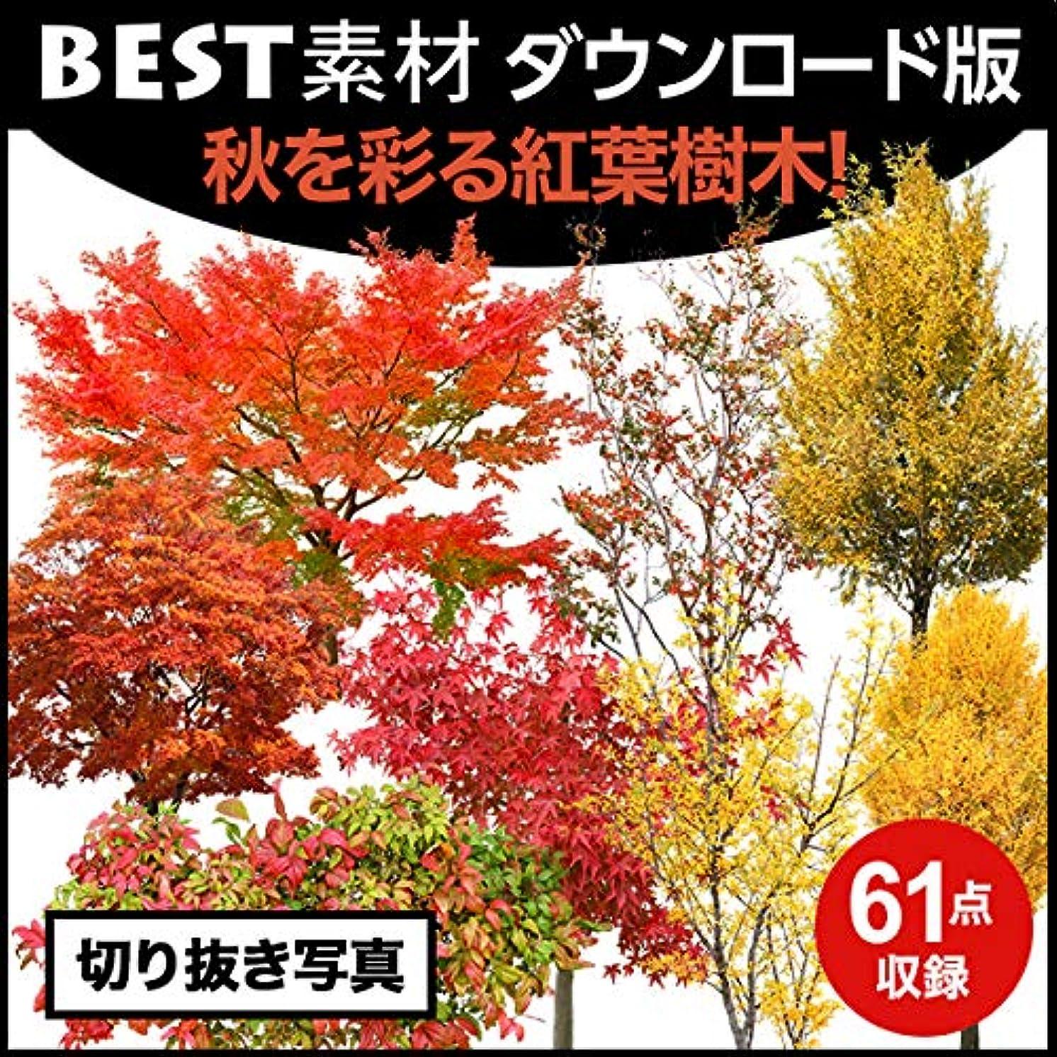 どこか狼扇動する【BEST素材】秋を彩る紅葉樹木|ダウンロード版