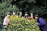 私立恵比寿中学 カレンダー 2018 ([カレンダー])