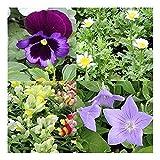 おまかせ花の苗9株セット(季節に応じた花苗になります)入荷に応じて5~9種類で出荷させていただきます。