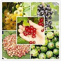 50PCS有機グースベリー盆栽ランタンフルーツ盆栽新鮮な多年草栽培のための栄養豊富な果物:MIX