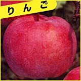 林檎(りんご)苗木 富士(ふじ)M26