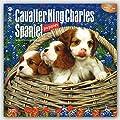 ブラウントラウト 2016年 カレンダー 壁掛け 犬 キャバリア・キング・チャールズ・スパニエル・パピー 16-ZB-504057