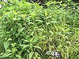 布袋農園 菊芋チップス きくいも茶 国産 無農薬 自然栽培 200g