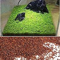 Kicode 植物の水生種 ウォーターグラス モス 風景 池の装飾 水槽(1パック) ウォーターグラス モス 風景 池の装飾 水槽