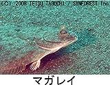 シンフォレストDVD 釣魚映像図鑑[海水魚・淡水魚]釣り人のための水中映像 画像