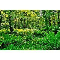 風景写真ポスター 福島 裏磐梯五色沼遊歩道 自然の美しさを最高級の素材とこだわりのプリントで再現しました。 (A1:84.1×59.4cm)