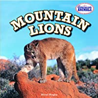 Mountain Lions (American Animals)