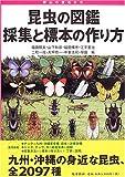 昆虫の図鑑採集と標本の作り方―野山の宝石たち