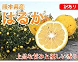 はるか みかん 訳あり 送料無料 1.5kg S~3L 熊本県産 2セットで1セットおまけ 3セットで3セットおまけ はるかみかん 上品な甘みと香り ミカン 蜜柑