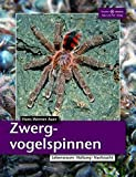 Zwergvogelspinnen: Lebensraum, Haltung, Nachzucht 画像