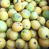 訳あり レモン 5kg 有機肥料栽培 防カビ剤不使用 れもん