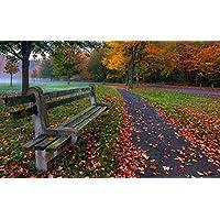 公園、木、葉、草、道路、ベンチ、色、秋 キャンバスの 写真 ポスター 印刷 旅行 風景 景色 - (105cmx70cm)