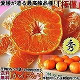 甘平 かんぺい 愛媛県産 約2.5kg M?6L 秀品 化粧箱 贈り物 贈答最適