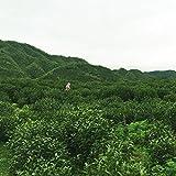 100g 100%高い山有機茶黄山毛峰緑茶新鮮な天然の新しい2015早春のお茶