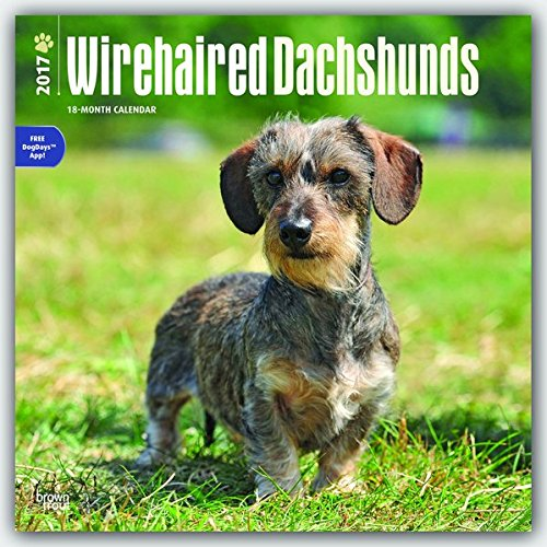 Wirehaired Dachshunds 2017 Calendar