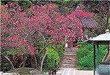 1000ピース 木蓮咲く明月院