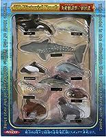 3D PictoRial Book 海棲哺乳類立体図鑑