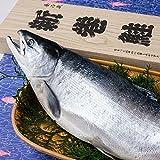 【新巻鮭】ロシア産塩紅鮭1尾(2.0kg)姿 (中塩)