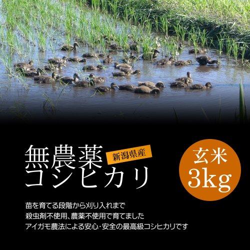 無農薬米コシヒカリ 玄米 3kg/アイガモ農法で育てた安心・安全の新潟米