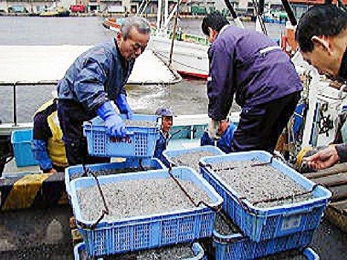 選ばれてNo,1 淡路島産 人気の減塩 獲れたて・干したて ちりめん 1kg ( チリメン しらす シラス )