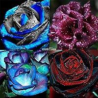 Type7:新ニースの愛らしい花の香りブルーム盆栽ローズ種子RR6