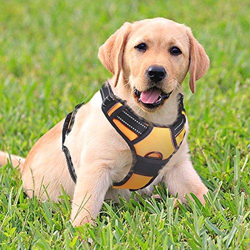 Rabbitgoo 犬 ハーネス 中型犬8-23KG 胴輪 ソフト 首輪 リード 簡単着脱 調節可能 歩行補助 引っ張り防止 咳き込み軽減 散歩 出かけ用 反射材 ハンドル付き 安全 通気 (オレンジ)