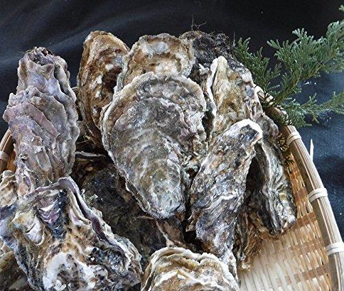 北海道直送 口の中に広がる濃厚な味 北海道釧路町・仙鳳趾産 殻付生牡蠣 Lサイズ 160g前後 10個