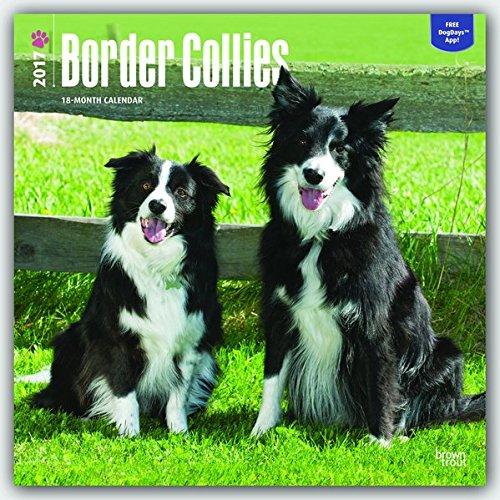 Border Collies 2017 Calendar (Square Wall)