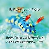 世界の美しいウミウシ