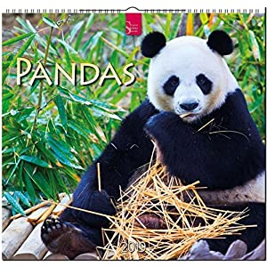 Pandas 2019: Mittelformat-Kalender