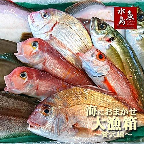 魚水島 「厳選」日本海の鮮魚セット 海におまかせ・たっぷり贅沢編