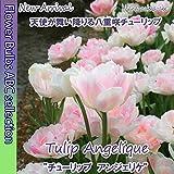 ★【オランダからの花便り】天使の八重咲き「チューリップ・アンジェリケ」5球【球根】