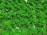 ジオラマ 50本 3cm (浅緑色)