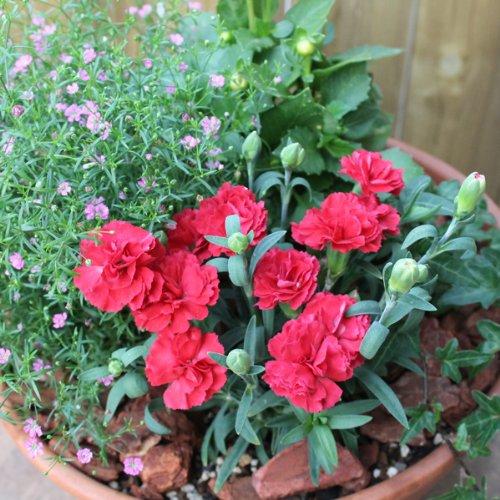 ギフト、ご自宅の庭先にもオススメ♪店長おまかせ季節に合わせた寄せ植え 園芸 プレゼント ギフト ガーデニング 引越し祝い