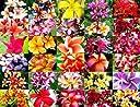 150.色とりどりの美しい花が咲き ハワイなどでレイに使われるプルメリアの花。 (Plumeria mix 10粒) 並行輸入品