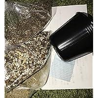 リトープス メセン 種まき用栽培セット(種は別途お買い求めください)