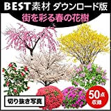 【BEST素材】街を彩る春の花樹_切り抜き写真|ダウンロード版