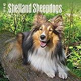 Shetland Sheepdogs 2018 Calendar