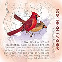 tree-free Greetings冷蔵庫マグネット、3.5 X 3.5インチ、Northern Cardinal by Roger Tory Peterson ( 62452 )