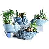 SUN-E 5.5 Inch Blue Conch Ocean Series Ceramic Base Serial Set Succulent Plant Pot Cactus Plant Pot Flower Pot Container Plan