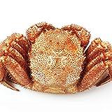 毛ガニ 1尾800g 超特大 BIGサイズ 最高ランク 堅蟹