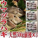 山形県産 ウマヅラハギ 500g5~6尾×3パック 冷凍 鮮魚セット カワハギ ウマズラハギ