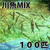 【生体】川魚MIX Sサイズ 2cm~5cm前後 100匹 エサ用 生餌 川魚 淡水魚
